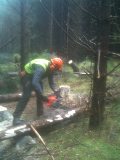 Tree Felling Training Courses