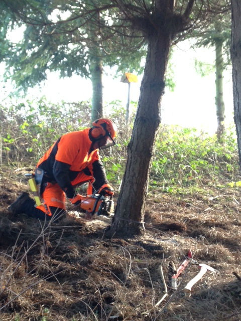 tree felling training course
